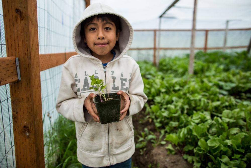 Young boy holding a plant.
