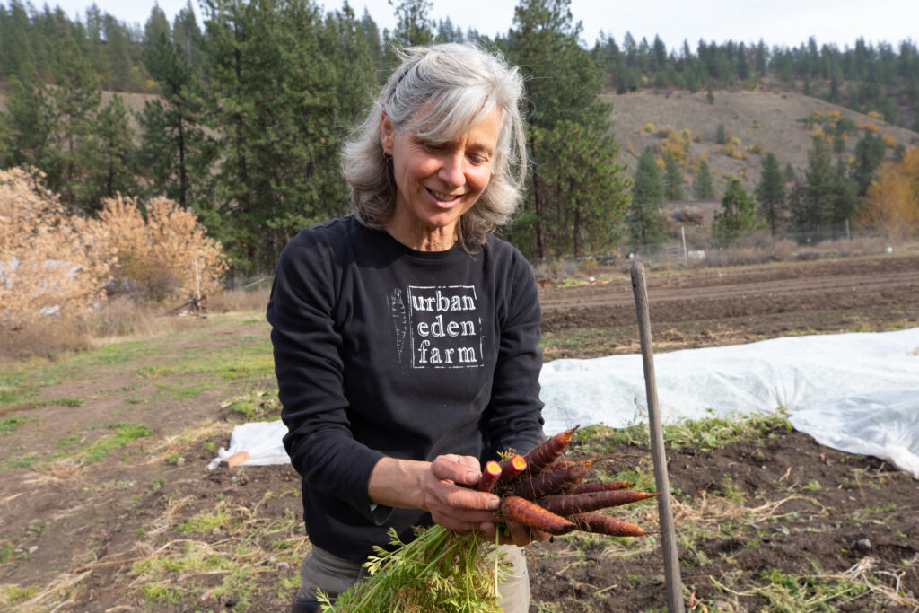 Woman in Washington state picking carrots