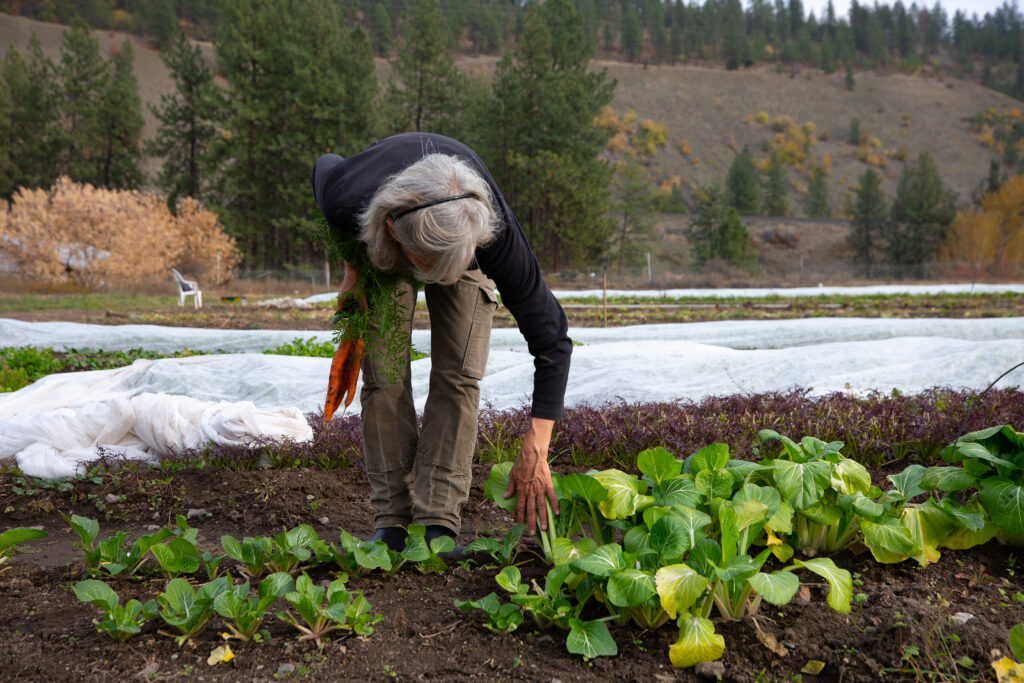 Woman in Washington state picking vegetables