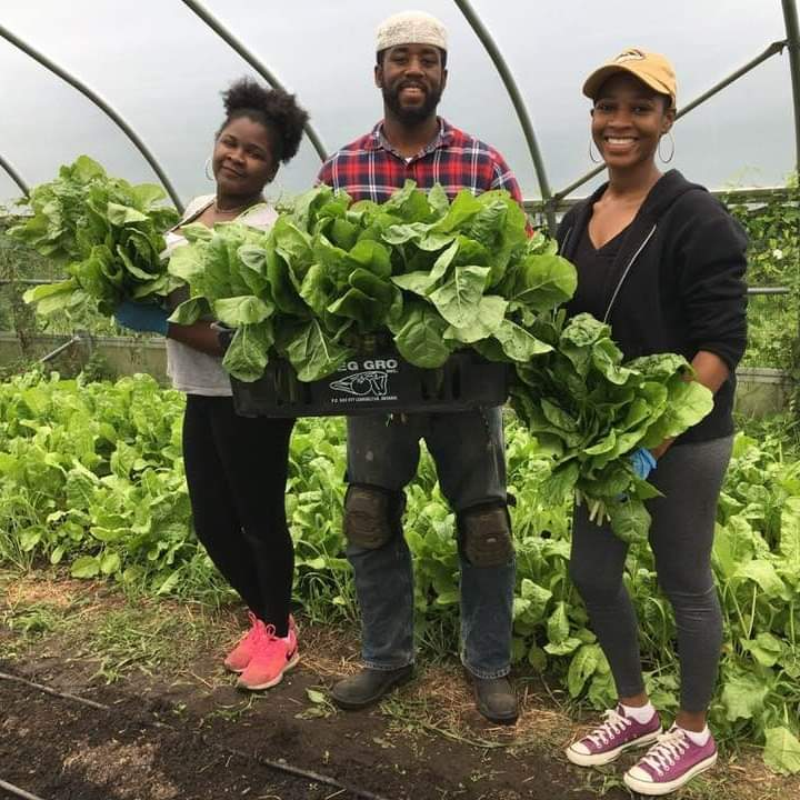 People harvesting vegetables at D-Town Farms in Detroit